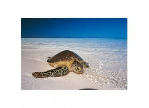 Stickers paysage la tortue sur la plage