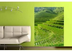 Stickers paysage Les rizières