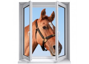 Stickers trompe l'oeil fenêtre Portrait de cheval