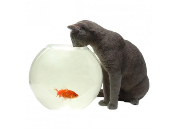 stickers chat et poisson