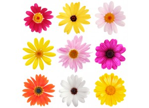 Stickers Fleurs 9 gerberas