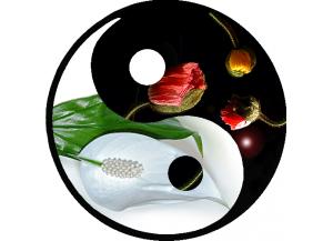 Stickers trompe l'oeil hublot Jardin zen